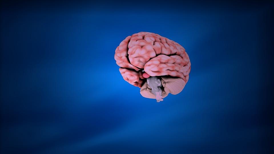 Neurologist in Chelsea – Best of the Best